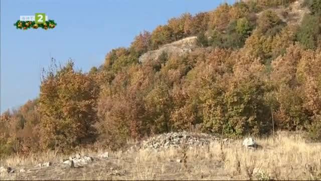 Крепостта Градището при с. Дъбница и параклисът Св.Архангел Михаил