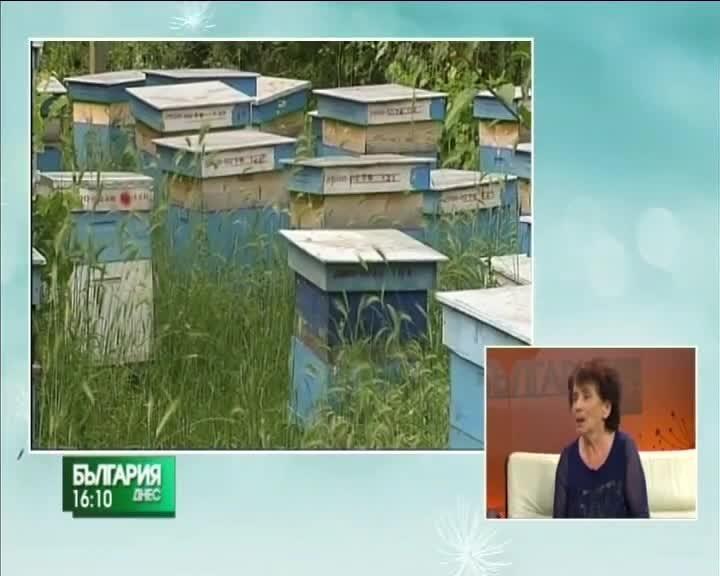 Какви са проблемите на пчеларите в Благоевградска област?