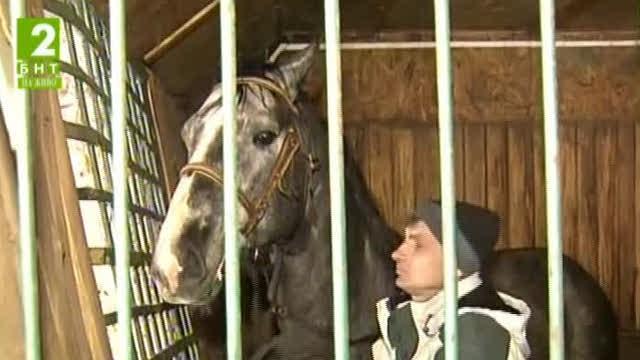 Как се грижат в студа за елитните коне в конна база край Русе