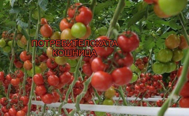 Истината за българския домат