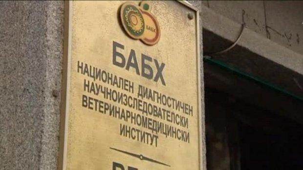 Борбата с чумата - първо интервю на новия директор на БАБХ проф. Паскал Желязков