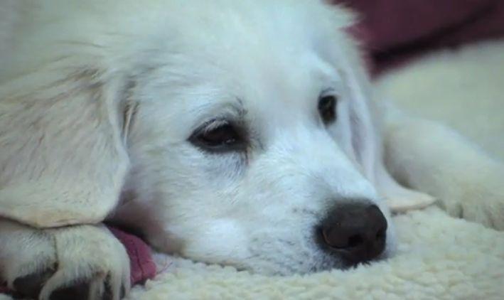 Приключенията на Бейли: Изгубеното кученце