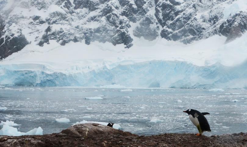 Проф. Христо Пимпирев: Антарктида е най-голямата природна лаборатория в света