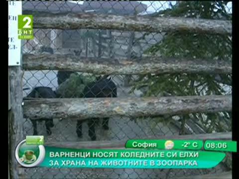 Варненци носят коледните си елхи за храна на животните в зоопарка