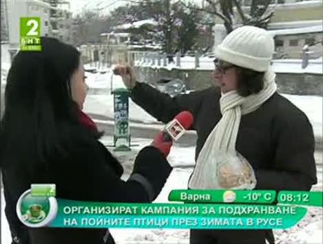 Организират кампания за подхранване на пойните птици през зимата в Русе