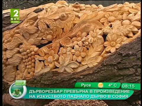 Дърворезбар превърна в произведение на изкуството паднало дърво в София