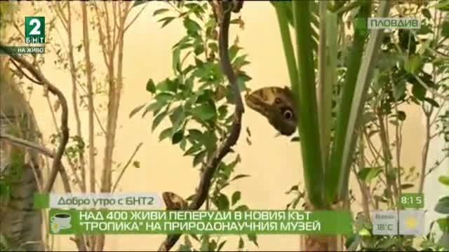 Над 400 живи пеперуди в новия кът Тропика в Природонаучния музей в Пловдив