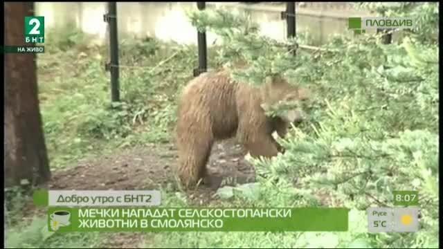 Мечки нападат селскостопански животни в Смолянско