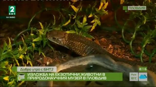 Изложба на екзотични животни в Природонаучния музей в Пловдив