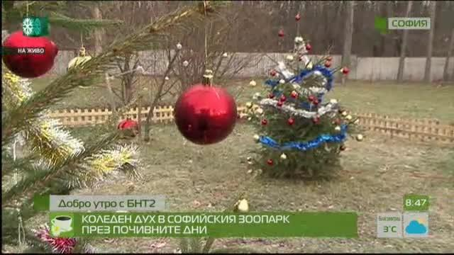 Коледен дух в Софийския зоопарк през почивните дни
