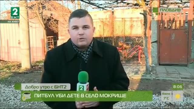 Питбул уби дете в село Мокрище