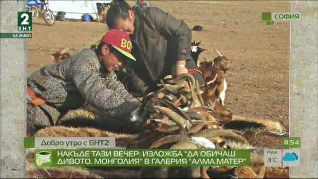 """Накъде тази вечер: Изложба """"Да обичаш дивото. Монголия"""" в галерия """"Алма Матер"""""""