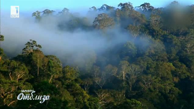 Светът отблизо: Борнео