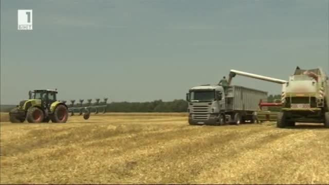 Селекцията на зърнените култури: кои са българските сортове