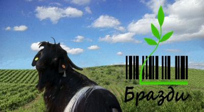 Избрано от Бразди: По пътя на козето сирене