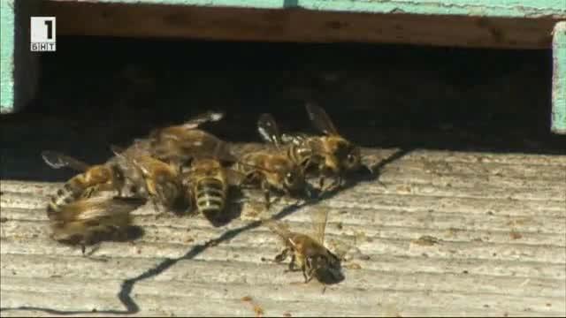 Тайните на пчеларството в Рила планина