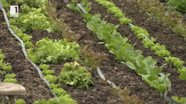 Пътят на малките ферми до крайния потребител