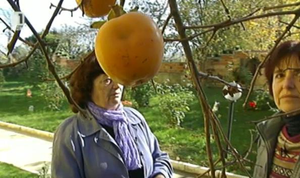 30.11.2013: Що за плод е райската ябълка