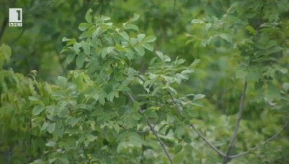 Залесяване и борба с пожарите – репортаж от Кърджали