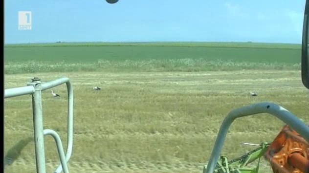 Скъпа и слаба реколта от зърно предвиждат експерти