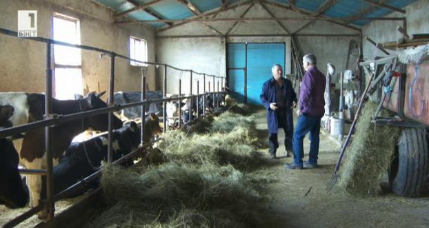 За бъдещето на малките млечни ферми