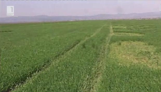 Още за кражбите на земеделска продукция