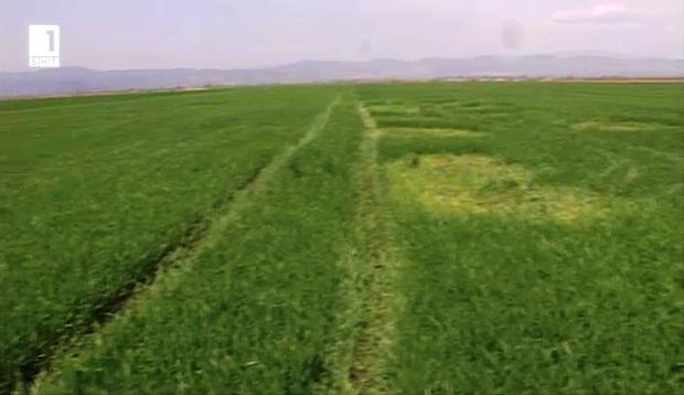 Кражбите на земеделска продукция – докога?