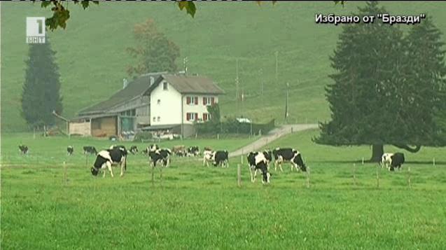 Първата швейцарска ферма за кози и продукти от козе мляко
