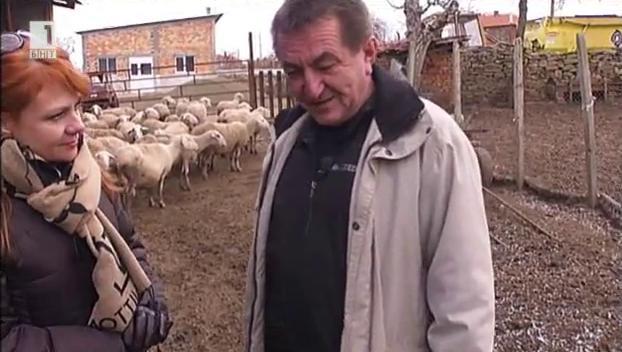 Овцевъдството - мисия възможна