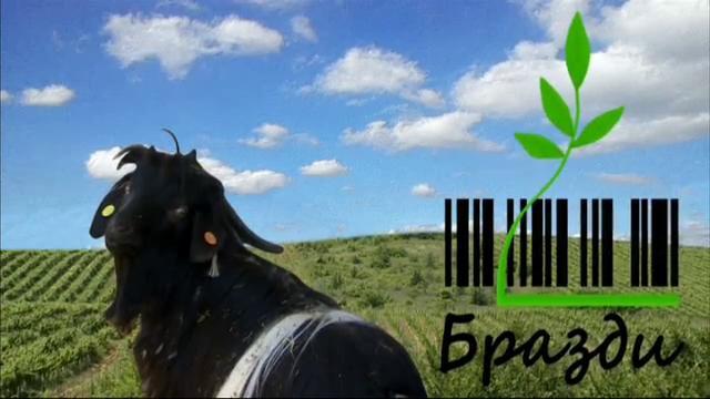 Лютите чушки - основа за много добър земеделски бизнес