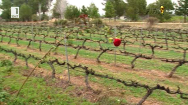 Как испанците станаха най-големите износители на вино?