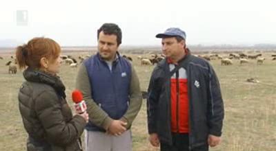 Какво е състоянието на българското овцевъдство?