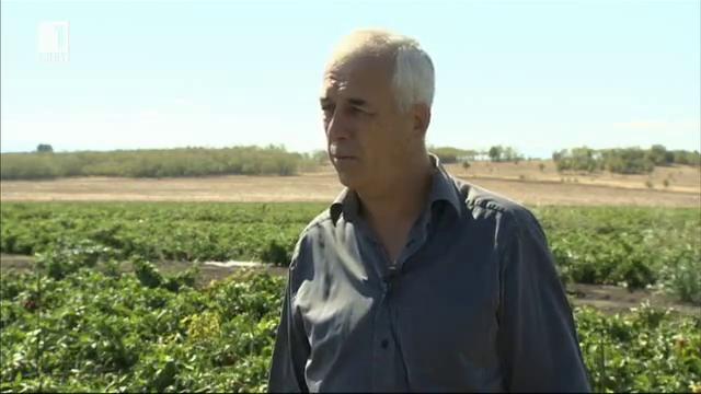 Защо според фермера Данчо Кощилаков пиперът е бингото на земеделието?