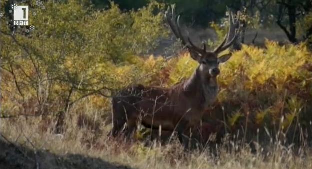 Нашата гора: Природните паркове Врачански Балкан и Беласица