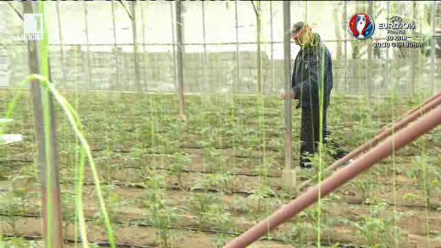 За етиката в оранжерийното производство