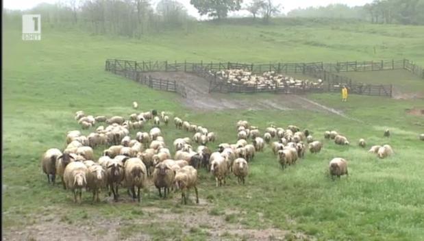 Промени в Наредбата за директни продажби от фермата