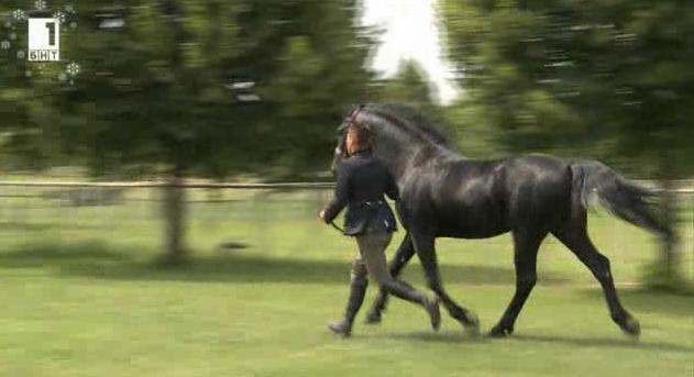 Как се промени коневъдството във Войводина?