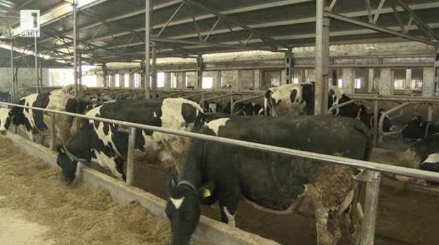 Защо двама братя от Пловдив избраха говедовъдството за свой бизнес