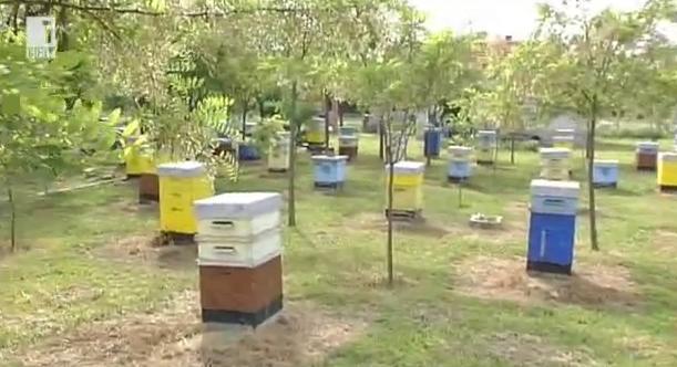 В света на пчелите