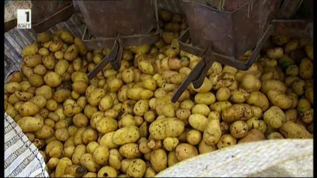 Производители на картофи с равносметка за 2016 година
