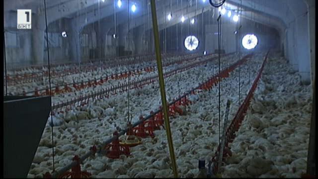 Епидемията от птичи грип. Какво да очакваме?