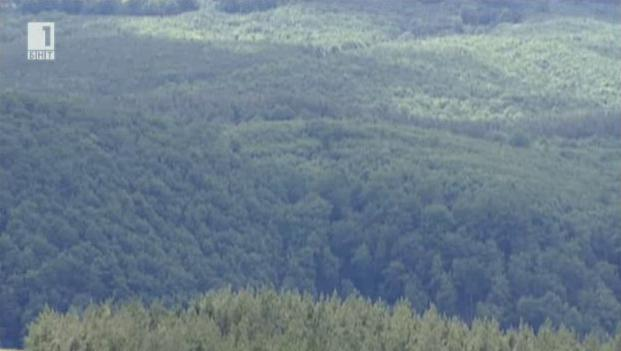 Залесяването - от семето до гората