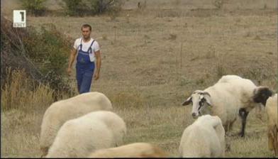 Николай от Мещица - европейски фермер, но друг път