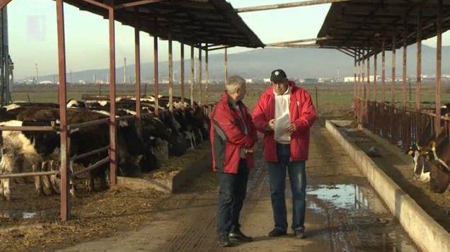 Бъдещето на млечните ферми в България