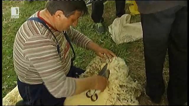 Събор на овцевъдите. Как се стриже овца?