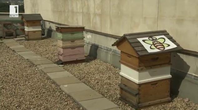 Българският опит в градското пчеларство