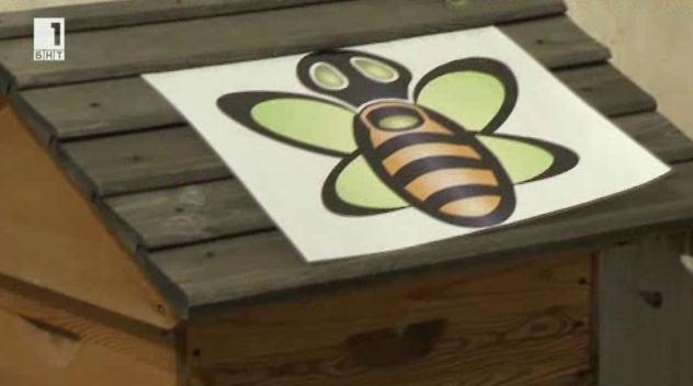Пчелин на покрива на хотел в България