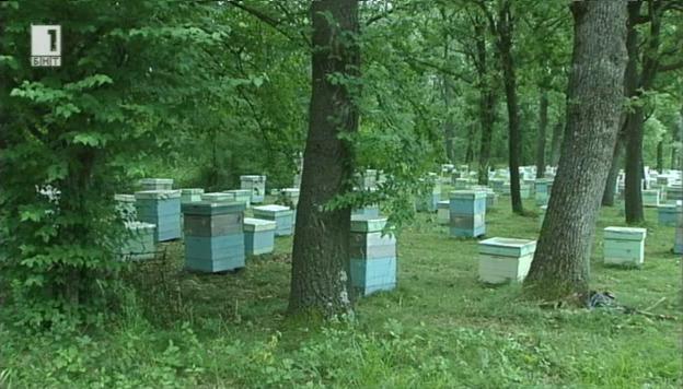 Пчеларството като индустрия