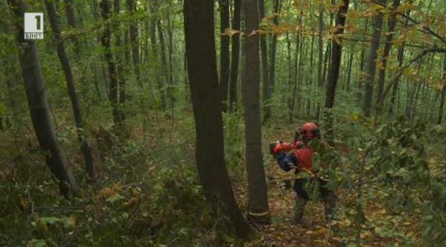 Дървата за огрев - кой и как ги добива