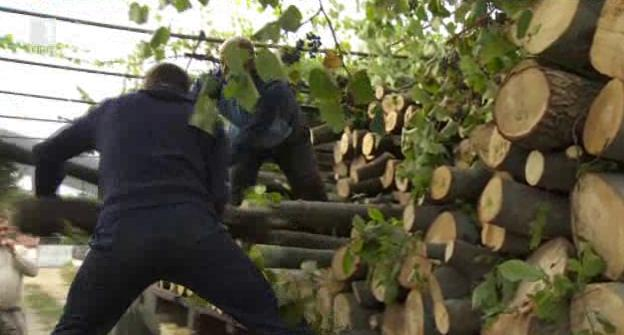 Как стигат до нас дървата за огрев